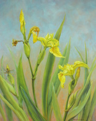 Pale Yellow Iris, 20x16 oil on board by Bridget Bossart van Otterloo